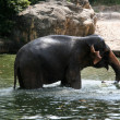 Elephant Show - Singapore Zoo, Singapore — Stock Photo