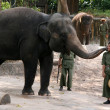 Elephant Show - Singapore Zoo, Singapore — Stock Photo #11568670