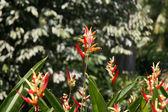 Blommor - botaniska trädgårdar, singapore — Stockfoto