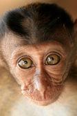 长尾的猕猴宝宝 — 图库照片