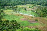 Bohol Island, Philippines — Stock Photo