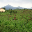 Stock Photo: Volcanoes in Kisoro, Uganda