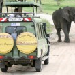 Elephant Blocking Road- Tanzania, Africa — Stock Photo #11659116