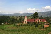 Rice Fields in Uganda, Africa — Stock Photo