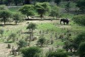 Elephant. Tanzania, Africa — Stock Photo