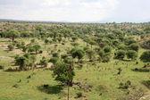 African Landscape - Tarangire National Park. Tanzania, Africa — Stock Photo