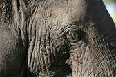 Elephant Skin. Tanzania, Africa — Stock Photo