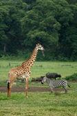 Tanzania, Africa — Stock Photo