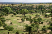 Landscap in Africa, Tanzania, Africa — Stock Photo