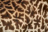 Giraffe - Tarangire National Park. Tanzania, Africa — Stock Photo