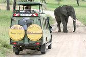 Elephant Blocking The Road- Tanzania, Africa — Stock Photo