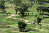 Elephant Habitat - Tarangire National Park. Tanzania, Africa — Stock Photo
