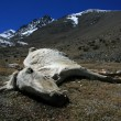 Dead Horse, India - Photo
