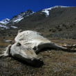 Dead Horse, India - 
