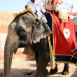 Elephant Ride - Amber Fort, Jaipur, India - Stock Photo