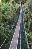 National Park - Penang — Stock Photo