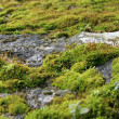 Stock Photo: Moss - Mcleod Ganj, India