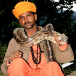 Snake Charming, India — Stock Photo #11887183