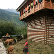 Cows - Vashisht, India — Stock Photo