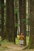 Forest in Manali, India — Stock Photo