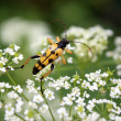 Macro scene with bug on yellow flower — Foto Stock