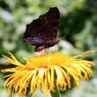 Butterfly on yellow flower in the garden — Foto de Stock