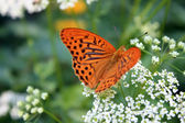 Delicate butterfly on white flower in summer time — Stock Photo