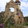 Day scene with preserved ruin of cistercian church, Romania — Stock Photo