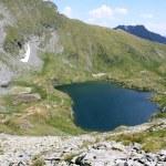Scene in the immediate area of the lake goat — Stock Photo