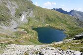 Scene in the immediate area of the lake goat — Zdjęcie stockowe