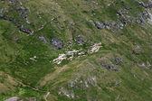 The flock of sheeps grazing on the mountain meadow, Fagaras mountains from Romania — Stock Photo