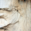 Core of a tree — Stock Photo