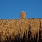 Straw hut — Stock Photo #11146752