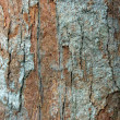 Stock Photo: Brown bark of tree