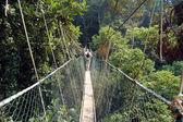 Taman Negara - Canopy walkway — Stock Photo