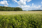 Rural field landscape in Poland — Stock Photo