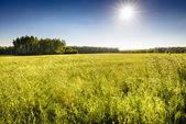 Ekologiczny owies pole — Zdjęcie stockowe