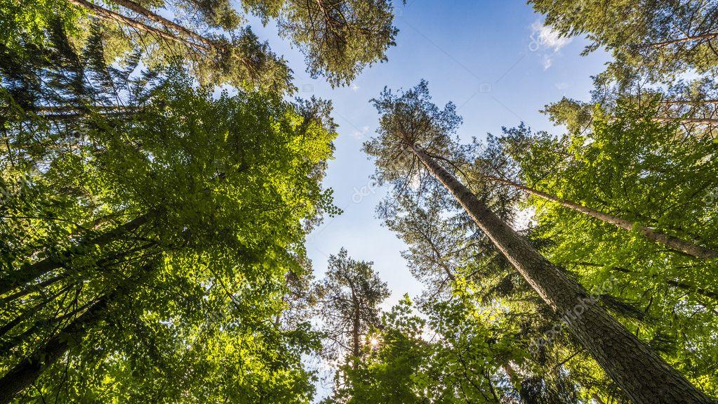 Фотообои Открытие между ветками в лесу