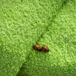 Two ladybugs on green towel — Stockfoto #11744177