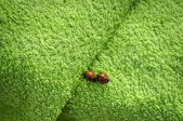 Two ladybugs on green towel — Stockfoto