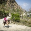 Nepalese villager on horse in Himalaya mountains - Stock Photo