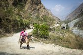 Nepalese villager on horse in Himalaya mountains — Stock Photo