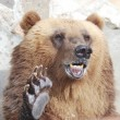 Stock Photo: Brown bear welcomes with paw
