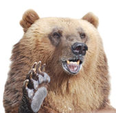 The brown bear welcomes with a paw isolated on white — Stock Photo