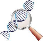 Hélice de adn bajo lupa en foco de atención, bioquímica — Vector de stock