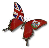 Bermuda flag on butterfly — Stock Photo