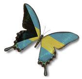 Bahamas flag on butterfly — Fotografia Stock