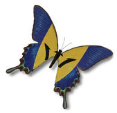 巴巴多斯国旗上蝴蝶 — 图库照片