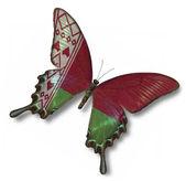 Belarus flag on butterfly — Stock Photo