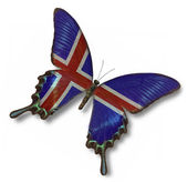Iceland flag on butterfly — Stock Photo